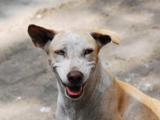 levi-the-dog